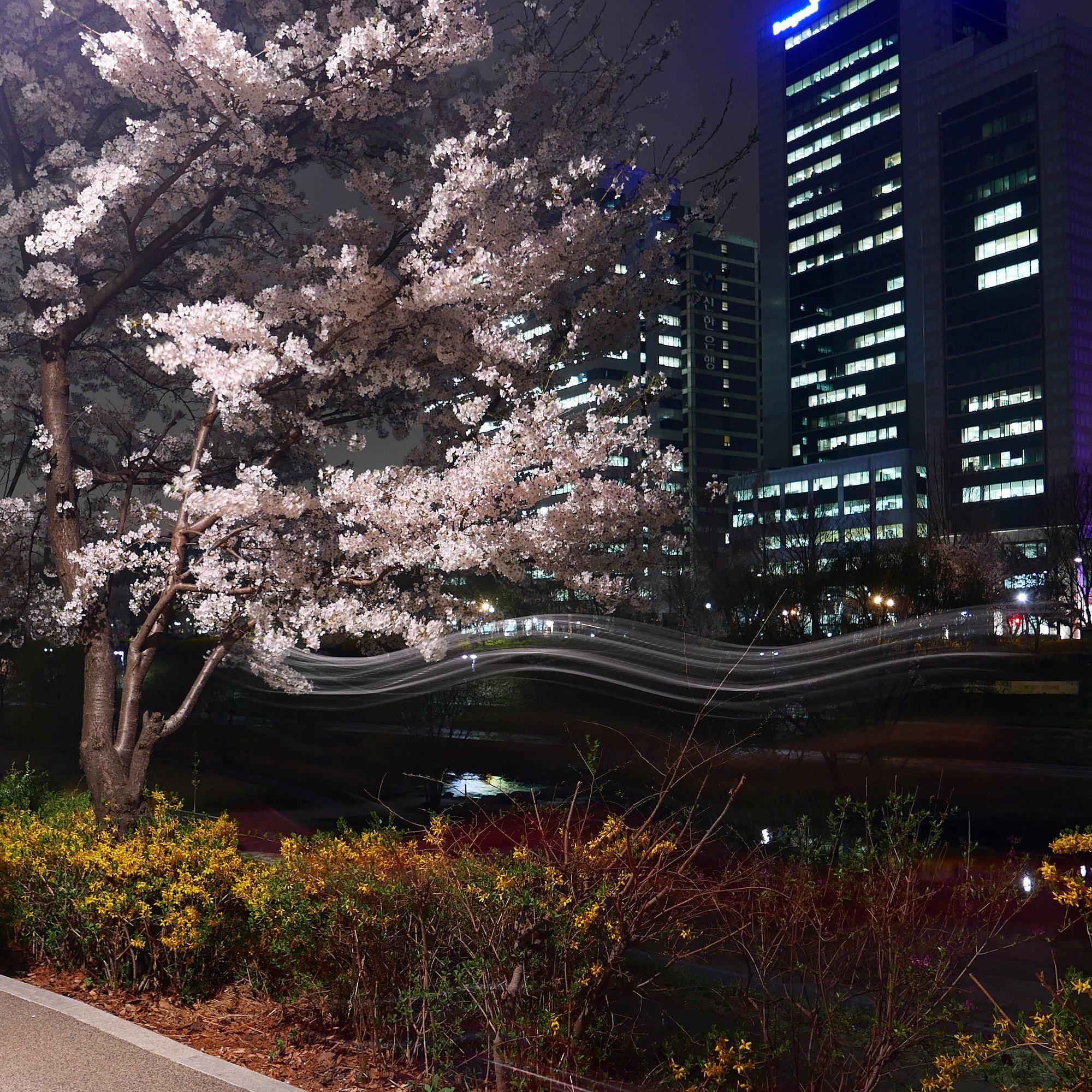 Night Cherry Blossoms And Cyclist Yangjae Seoul South Korea 2000x2000 Oc Https Ift Tt 2rgjjt2 South Korea Photography Scenery Korea Wallpaper