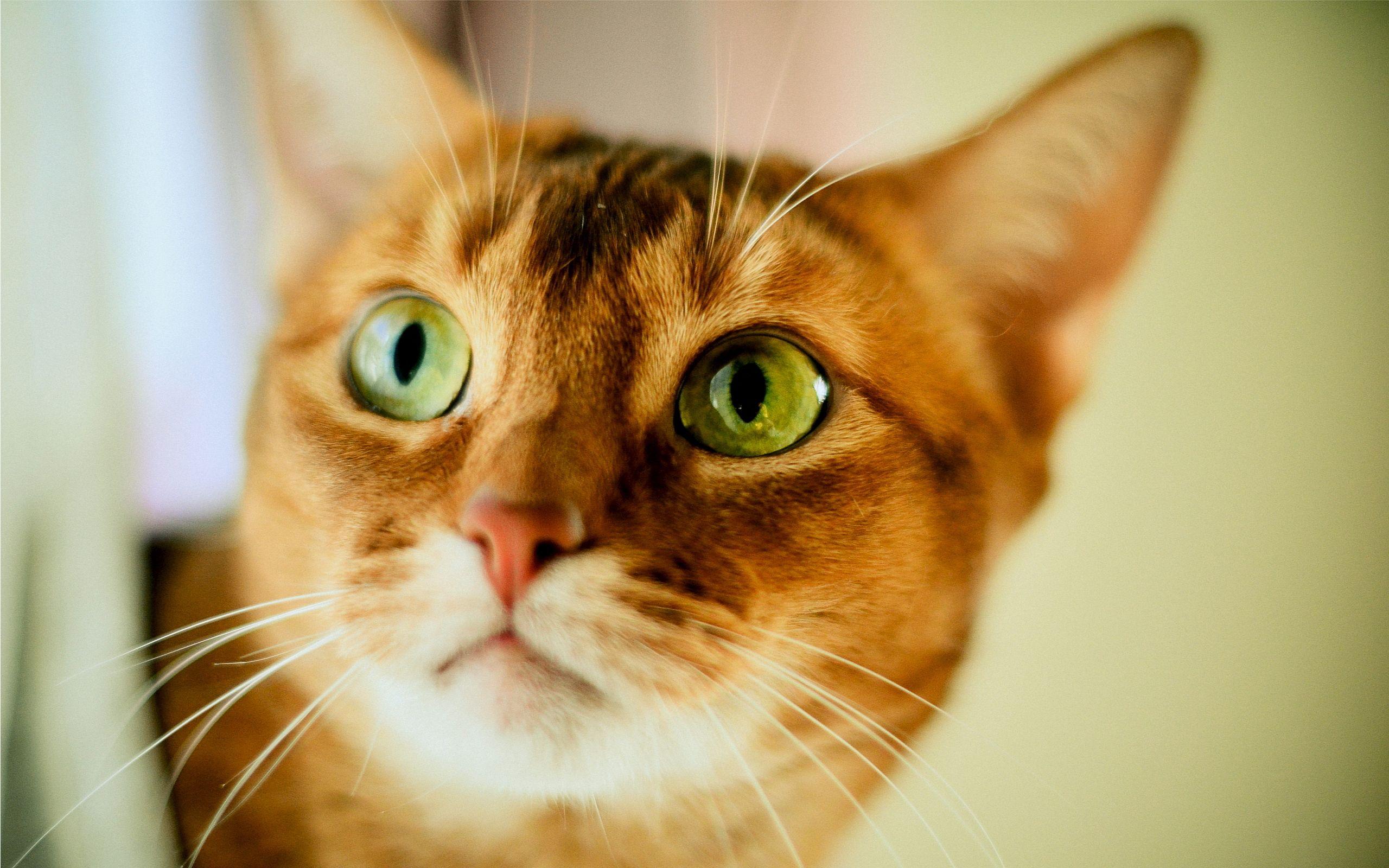 Cat Eyes Green #6968044