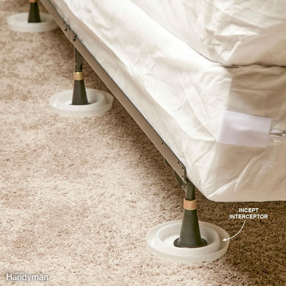 How To Get Rid Of Bed Bugs A Diy Guide Rid Of Bed Bugs Bed