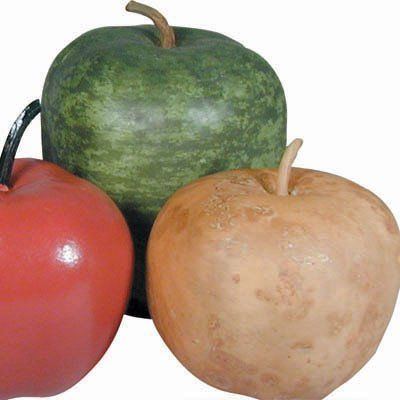 Detailed Growing 24 Fun Craft Kids Drying Instructions APPLE GOURD SEEDS