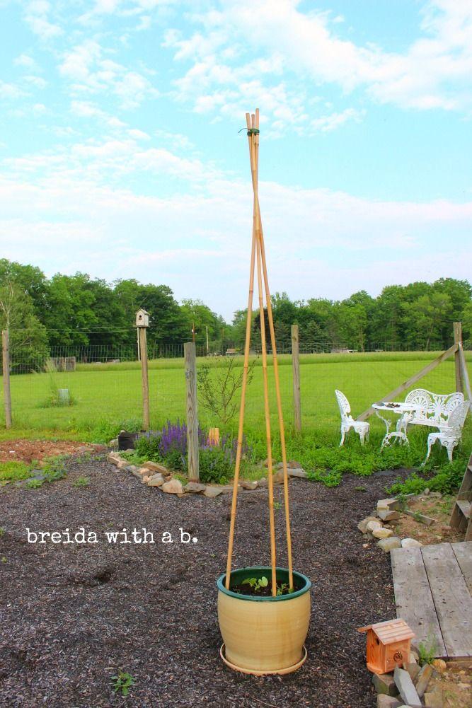 Pin By Doug Harrington On Gardening Ideas Tips Plants Garden Vines Lawn And Garden