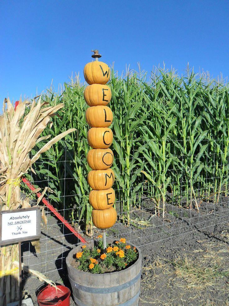 Pumpkin Patch & Corn Maze #pumpkinpatch