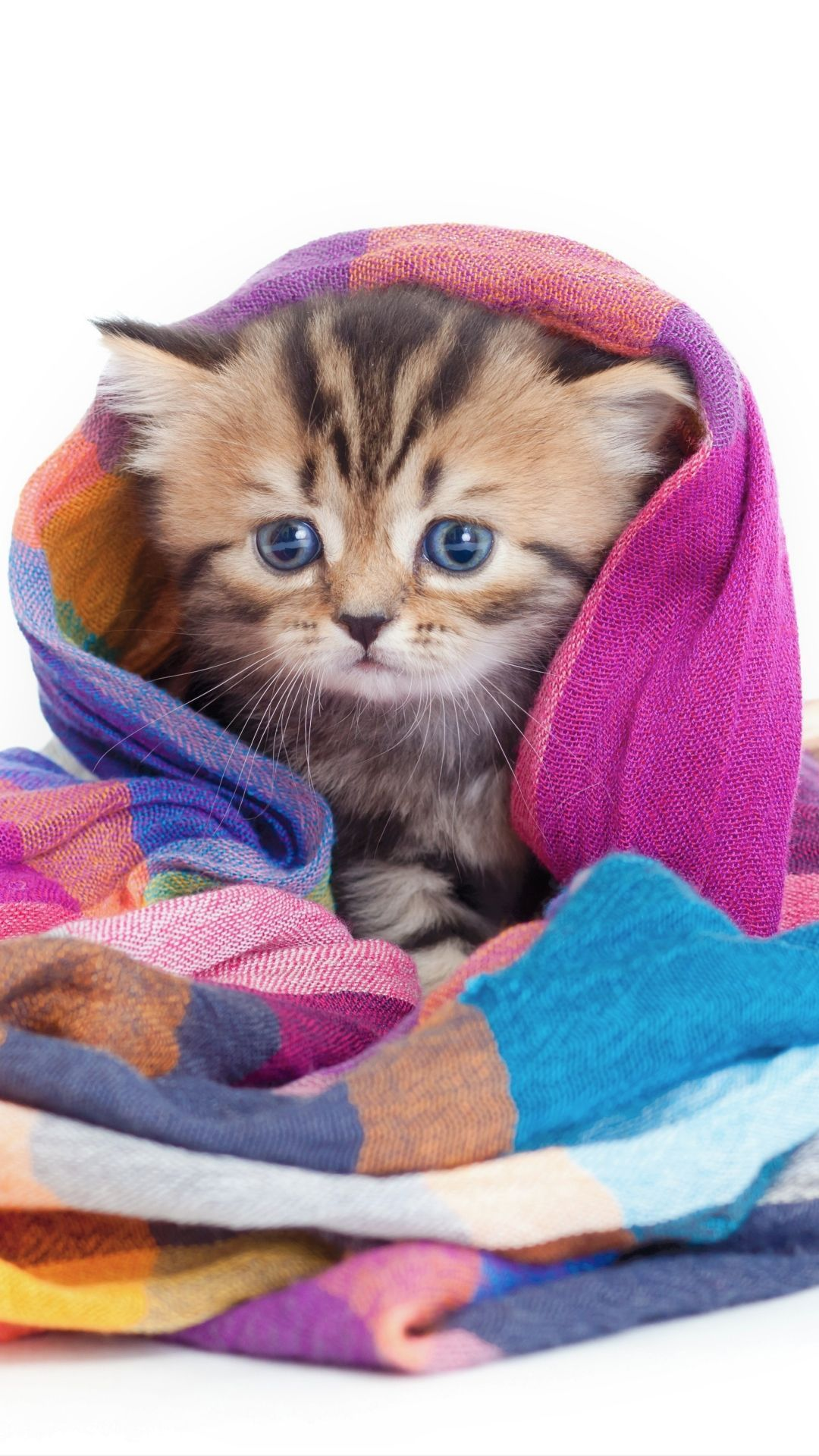 Kitten Cat Wallpaper Android Cats And Kittens Cute Animals Cats