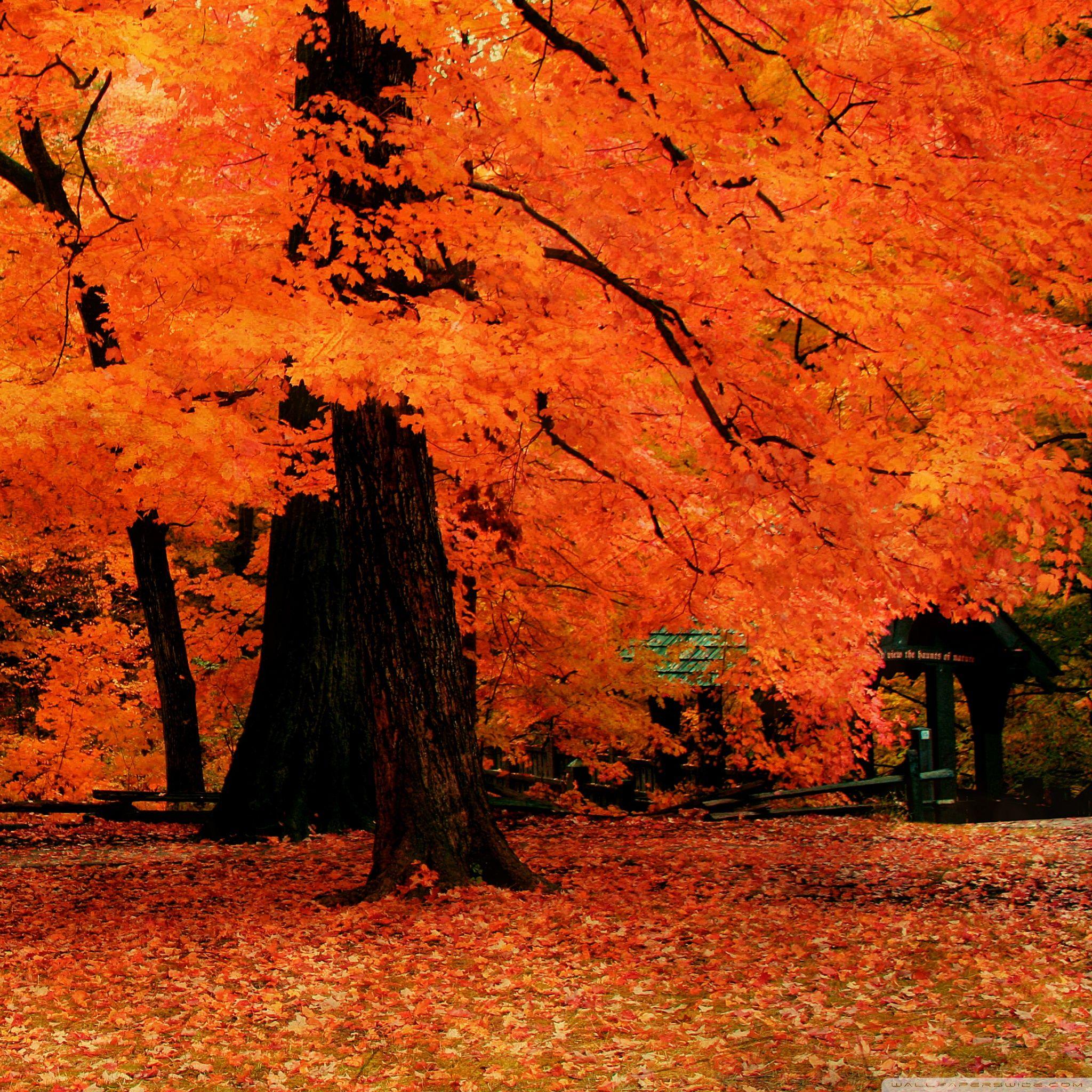 25 Fall iPad Wallpapers Fall wallpaper, Autumn trees