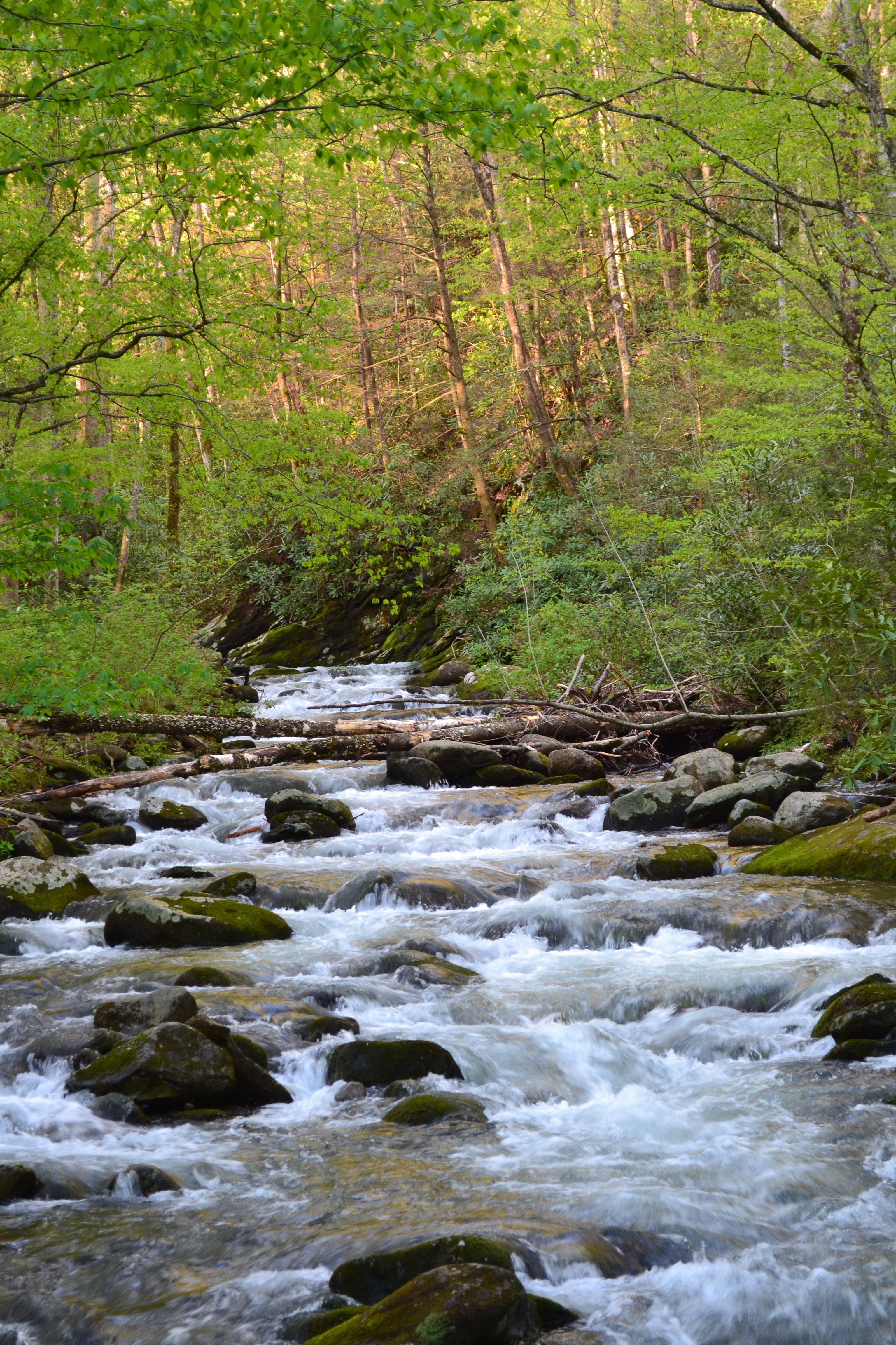cabin rentals nc springs little cabins lodging cottages creek fall in falls bird hot
