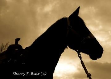 Horse in Silhouette Matted 5x7 Photograph by HighPlacesPhotography for $15.00