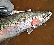 Muskegon River, Michigan Fly Fishing Reports & Conditions