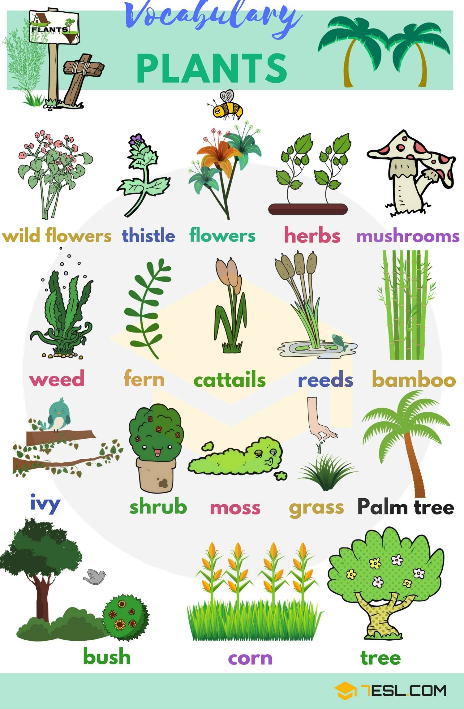 Plant Names List Of Common Types Of Plants And Trees 7 E S L English Vocabulary Plants Vocabulary Learn English