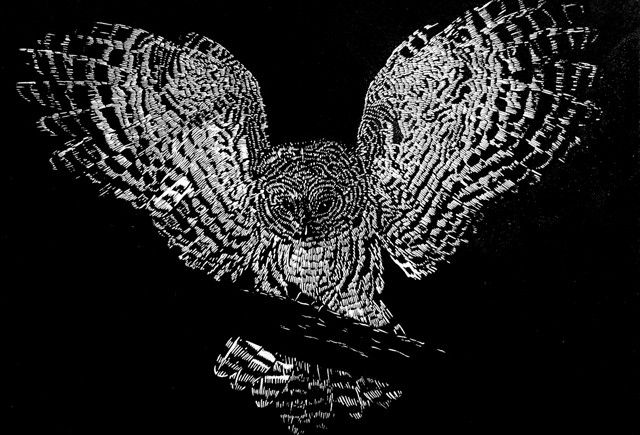 owl art owl black beetle tweedle pinterest black beetle
