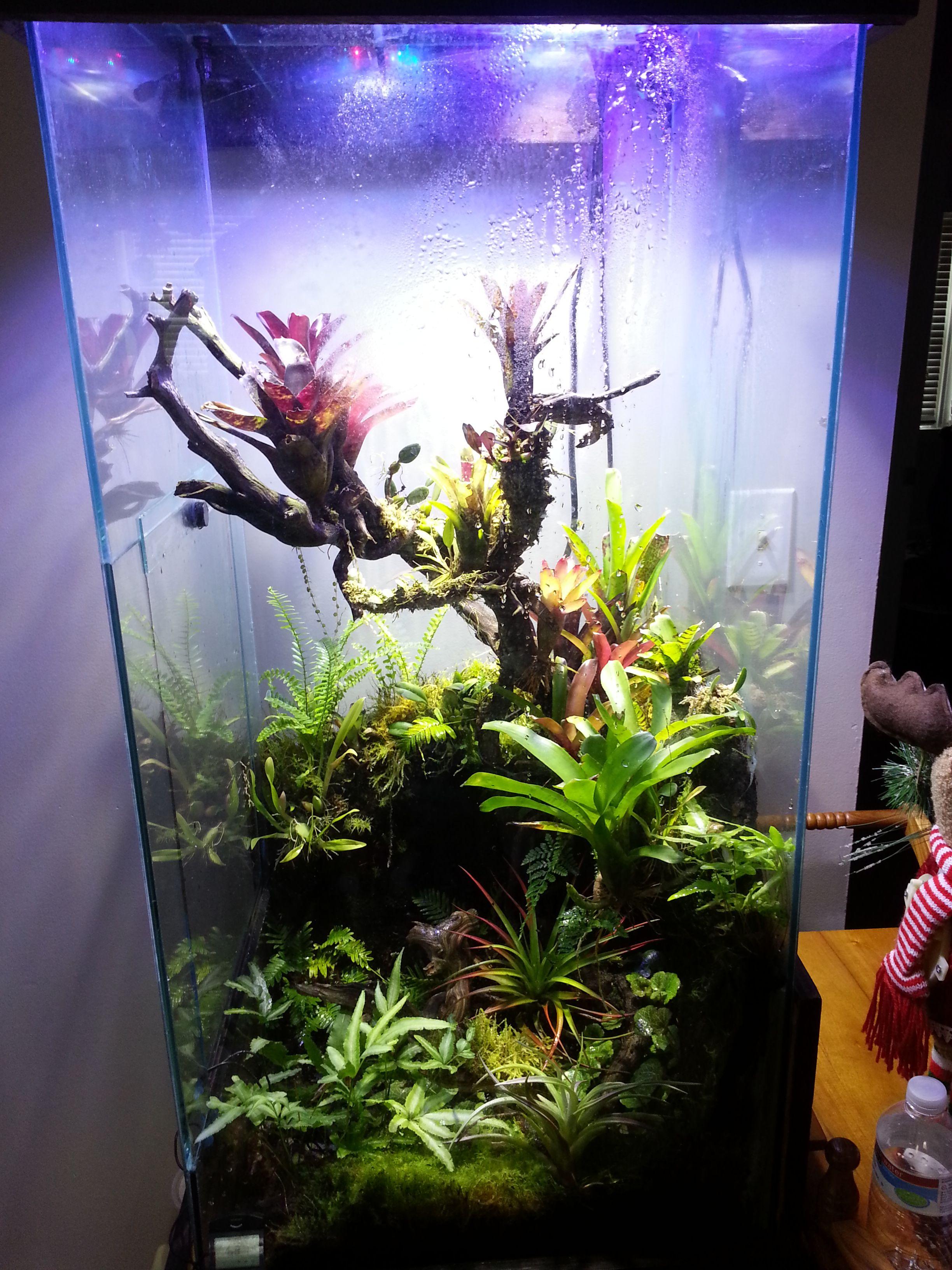Giga 39 s vivarium vivarium inspiration pinterest for Fish tank frogs