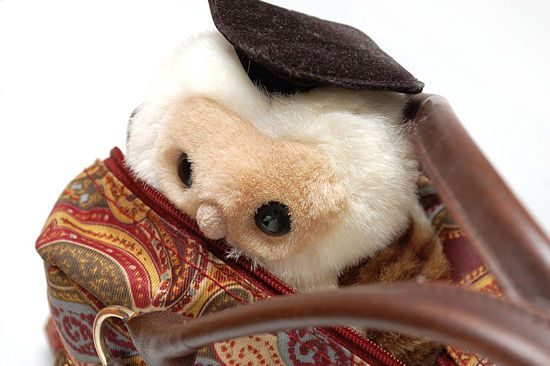 How to Love Your Stuffed Animal: 7 steps (with pictures)