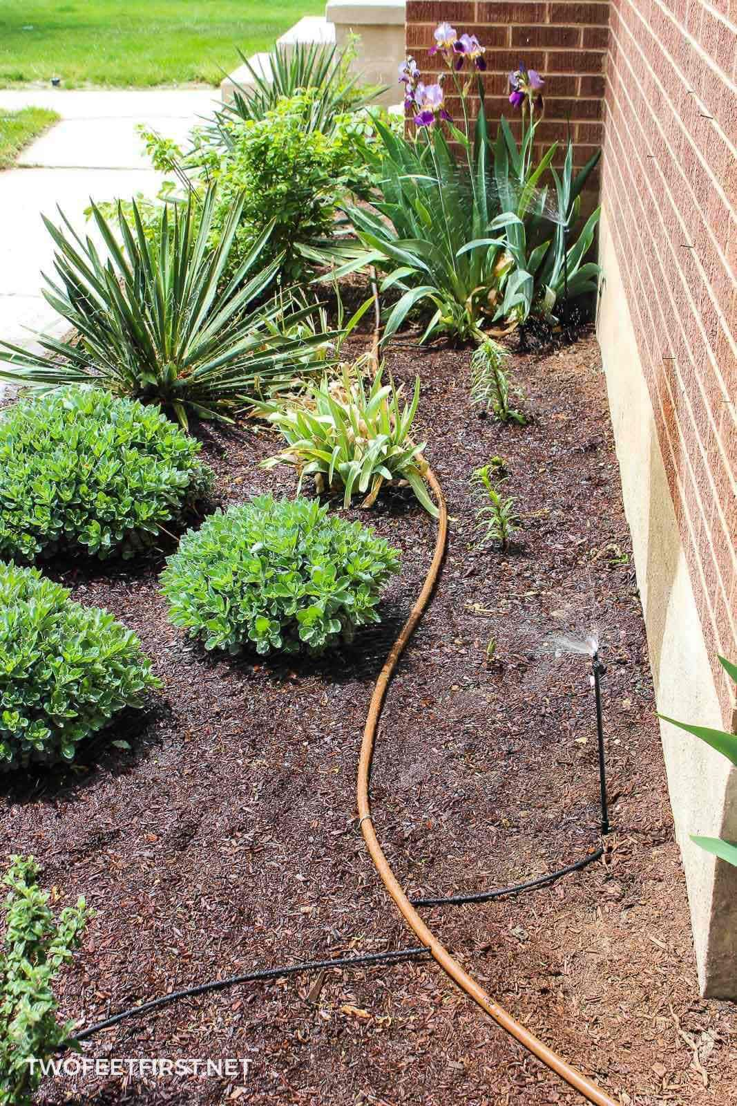 DIY Drip Irrigation System Drip irrigation system, Drip