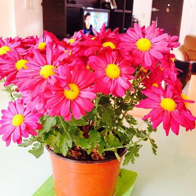 Jardin dentro del hogar, flores rosas. #Decoracion #Flores