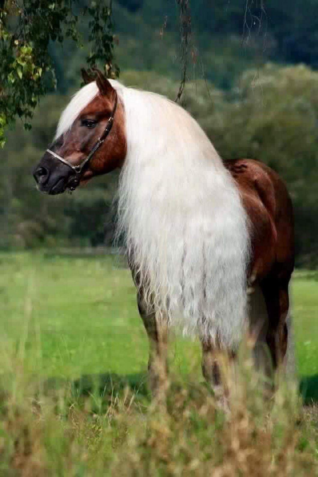 1d1f4f2857857 Pin de Pepe In Wonderland en Caballos   Pinterest   Horses ...