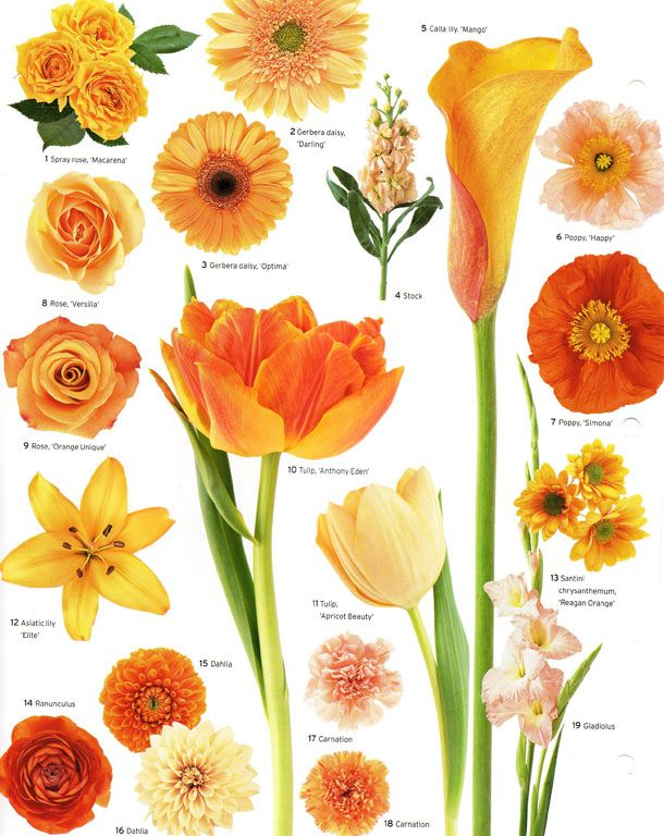 A Little Flower Education For Your Wednesday Evening Courtesy Of Martha Stewart Weddings Have A Good O Types Of Flowers Vintage Wedding Flowers Flower Guide