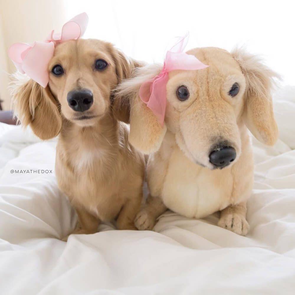 Dachshund Stuffed Animal Dog Stuffed Animal Custom Dog Plush Custom Dog