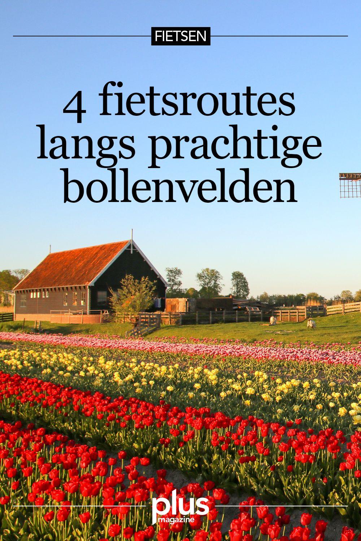 4 prachtige bloesem- en bollenfietsroutes