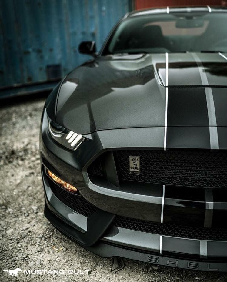 Shelby Mustang | Ford Mustang GT | Pinterest | Shelby mustang ...
