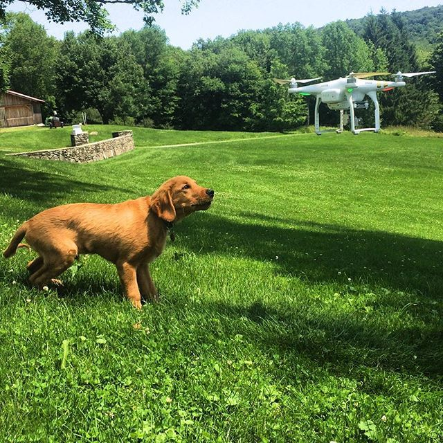 Cody The Golden Retriever Votes For Drones As The Best Dog Toy Of 2015 Dogs Tech Goldenretriever Best Dog Toys Companion Dog Dogs