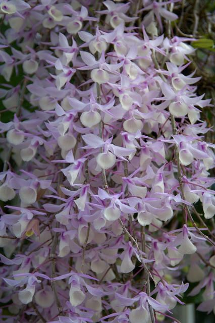This Is H Ow It S Flower Looks Like Close Up Uk Hsbc Direct Bank Deposit Ebay Orchid Flower Rare Orchids Beautiful Orchids