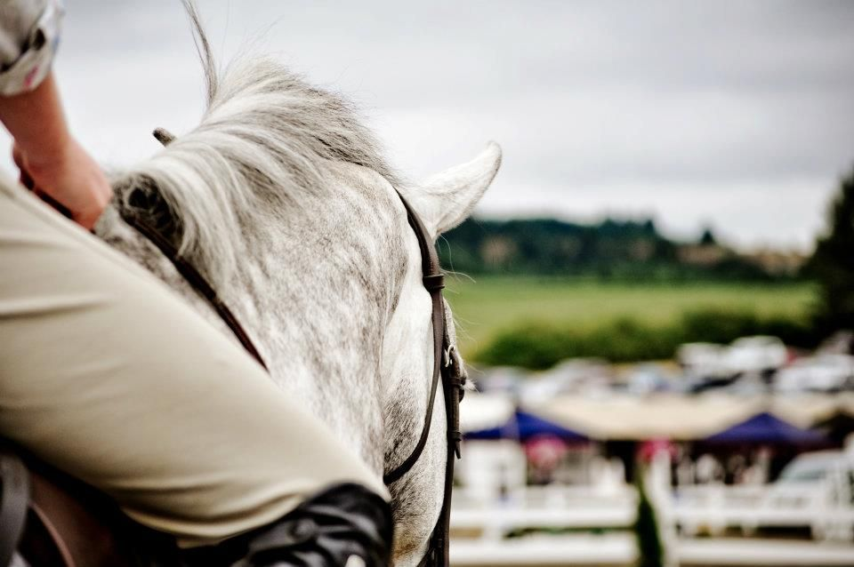 Cheval Photography