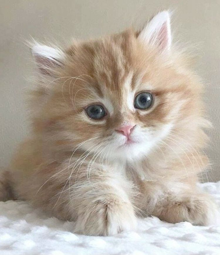 Cute Baby Animals To Draw Easy Against Cutest Kittens In The World Pictures Upon Cutest Kittens Ever Im Gatos Bonitos Perros Y Gatos Tiernos Gatitos Esponjosos