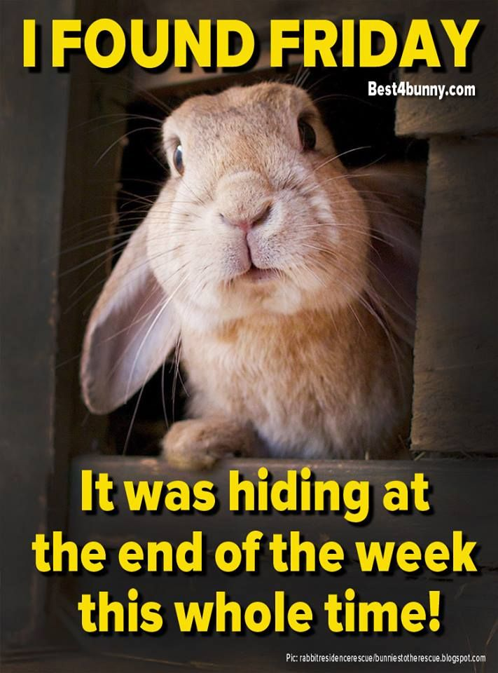 Rabbit Care Advice Best 4 Bunny Friday Quotes Funny Friday Humor Its Friday Quotes