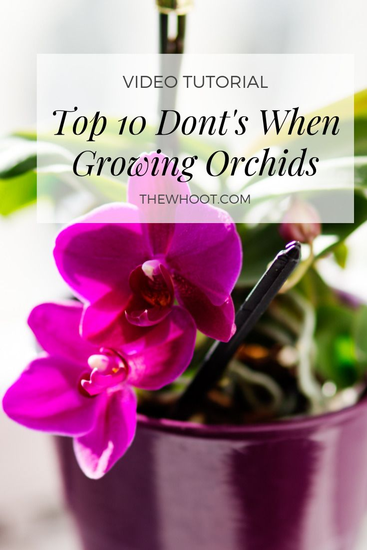 Top 10 Don'ts When Growing Orchids #growingorchids