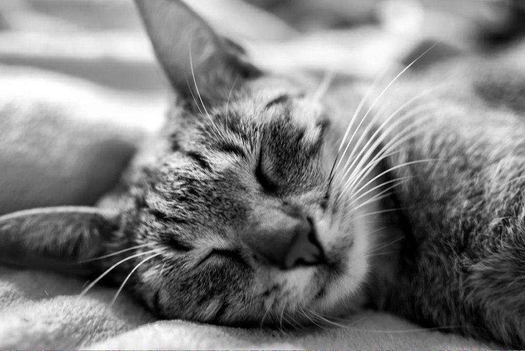 Can Cats Drink Milk DoesCatsHaveNightVision Referral