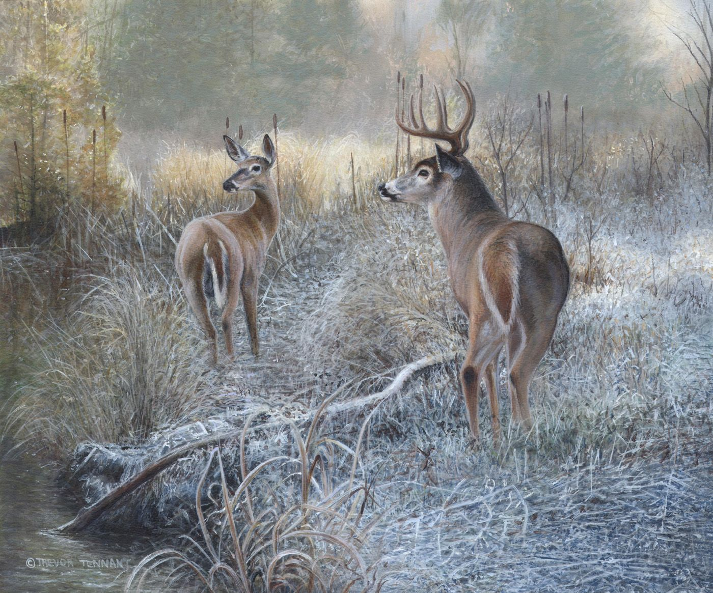 Whitetail Deer Painting Titled Morning Frost Hunting White Tail