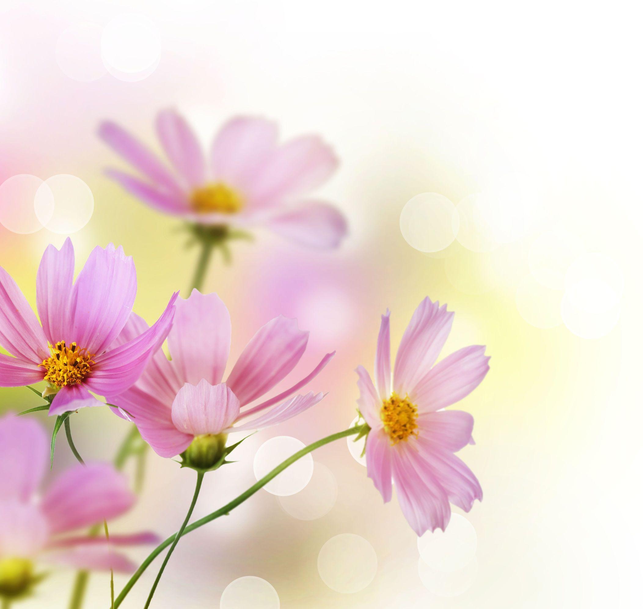 Flower Wallpaper App For Android