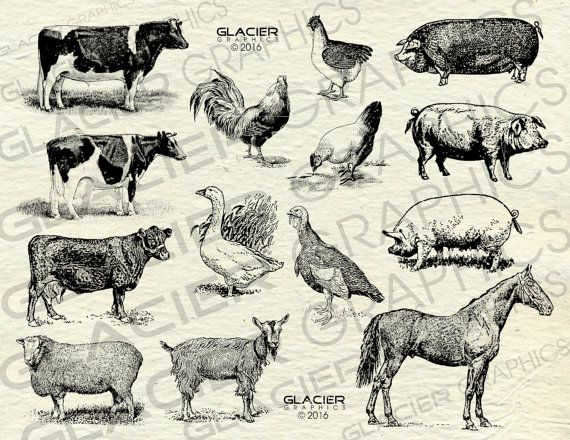 Vintage Farm Animal Illustrations Printable Farm Animals Clipart Farm Animals Vector Country Farm Animals Clipa Animal Clipart Animal Illustration Vintage Farm