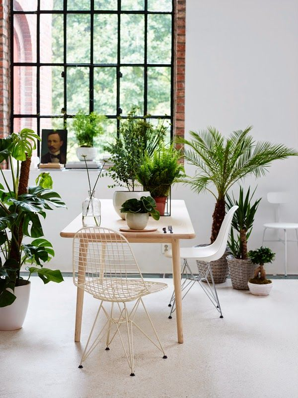 Plant haven | greenery in the home
