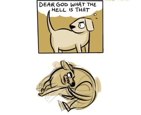 What are some comic strips that describe dog behaviour? - Quora