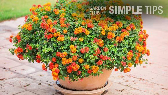 Outdoor Living Ideas The Home Depot In 2020 Plants Lantana Plant Lantana
