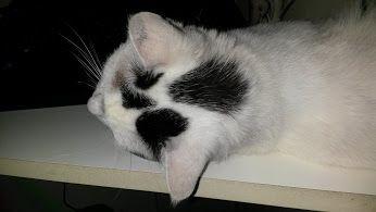 La mia gatta ~ Boh ~