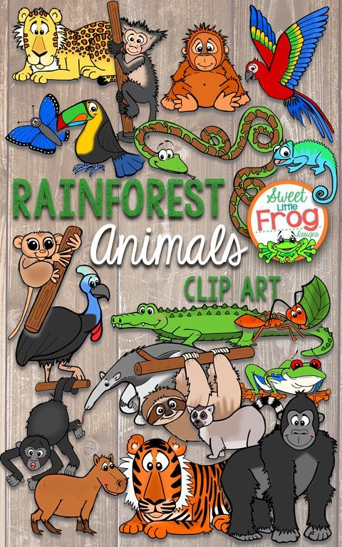 These Rainforest Animals Are So Cute They D Be Perfect In Preschool Or In Early Elementary Kindergarten 1st Rainforest Animals Rainforest Rainforest Theme