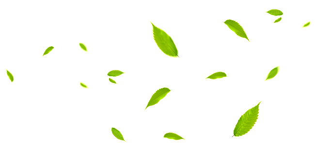 Green Leaf Png Element Material Green Leaves Leaves Plant Leaves