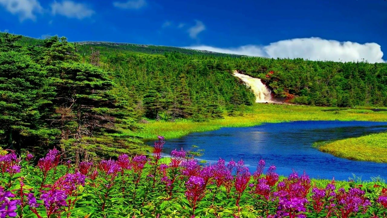 Beautiful Nice Animation With Natural Waterfall Scenery Dream Backgroun Waterfall Scenery Dream Background Free Video Background