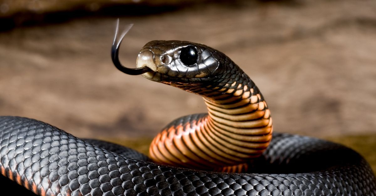 Ruyada Yilan Gormek Animals Snake