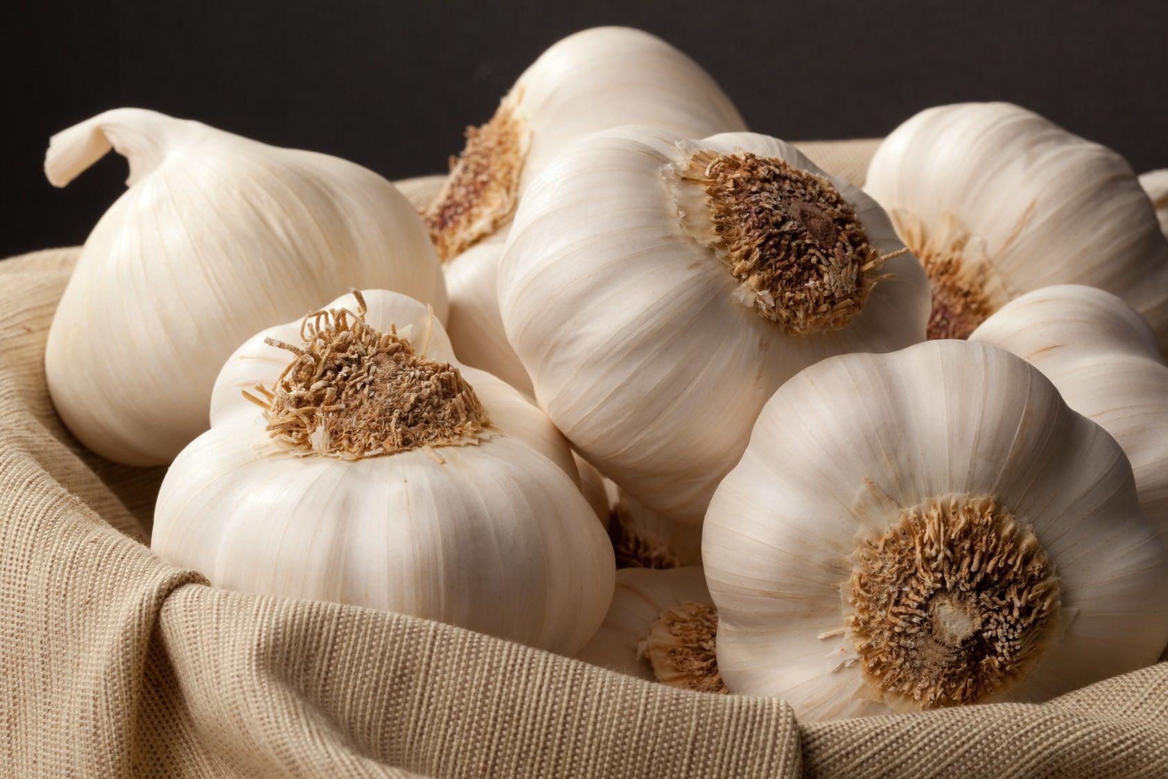 تفسير رؤية زرع الثوم في المنام موسوعة Garlic Health Benefits Garlic Benefits Anti Aging Food