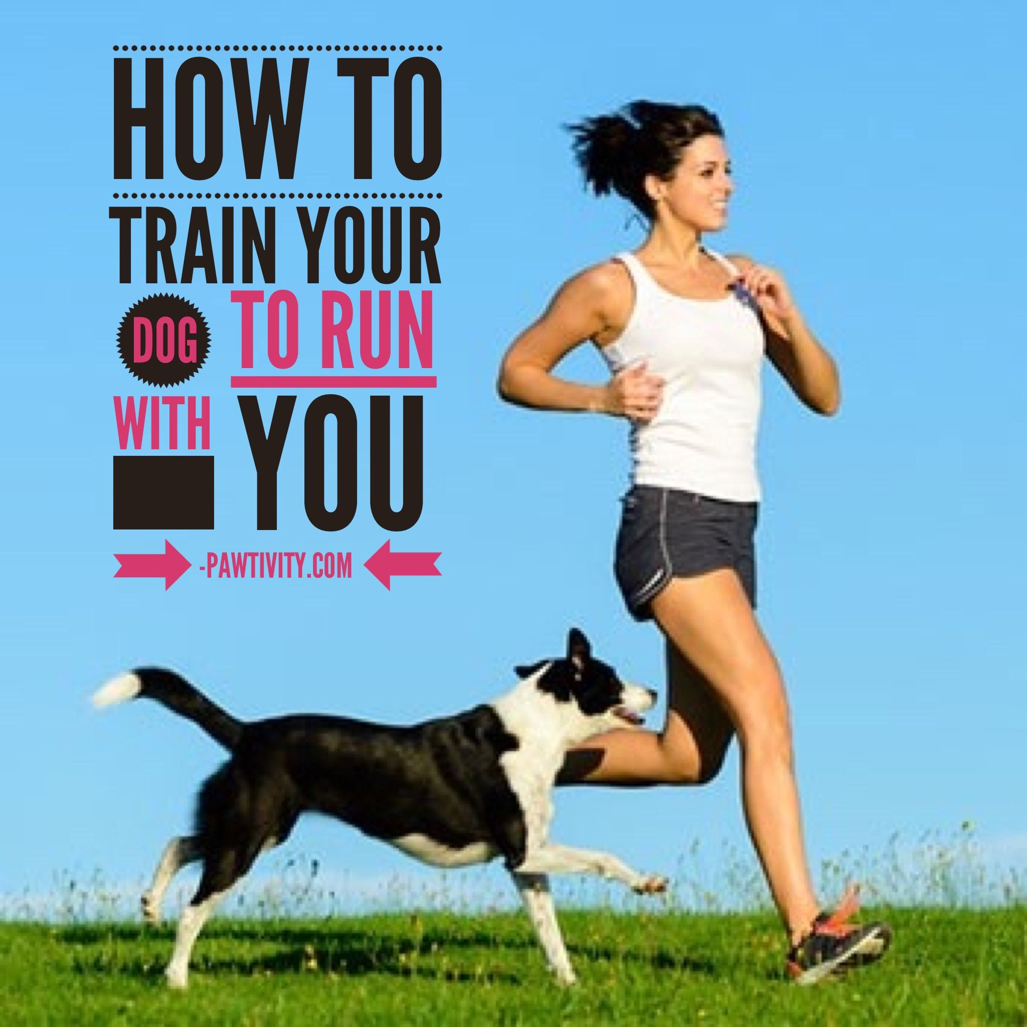How To Train Your Dog To Run With You Training Your Dog Dog