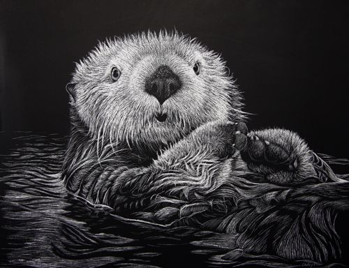 Drawings Of Sea Otters Shelleyprior.home. | Art Designs | Pinterest ...