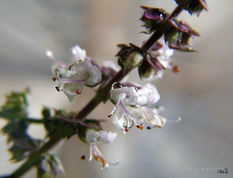 Springtime ~ 5