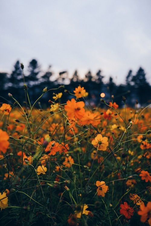 Moody Nature Ponderation Orange By Suhyeon Chio Vintage Flowers Flowers Photography Vintage Travel Wedding Theme