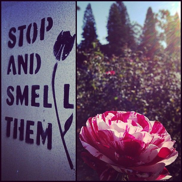 Stop and smell them Chancellors Rose Garden by Watson Bridge