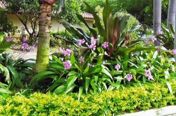 florida landscaping ideas pictures | Gardening: Tropical | Pinterest ...
