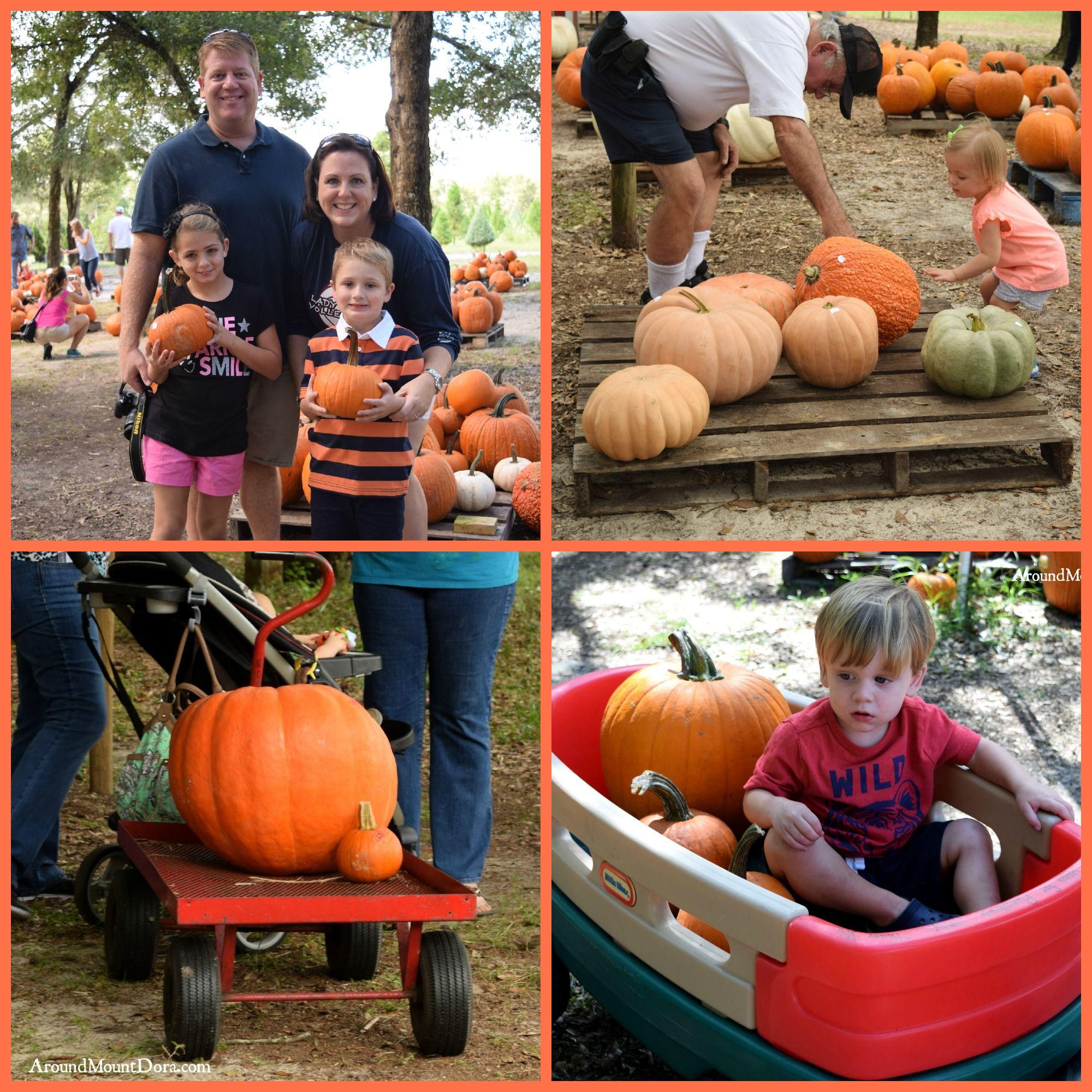 "Santa's Farm celebrates Fall with ""Lot of Pumpkins"" also"