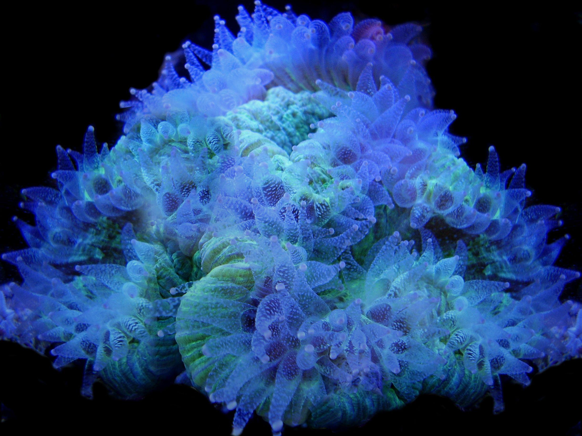57899d14c8bc2ba207d02d14c08256d7 Frais De Tuyau Aquarium Des Idées