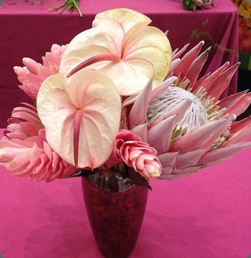 Amazing floral arrangement of spiky king protea, pink ginger and ...